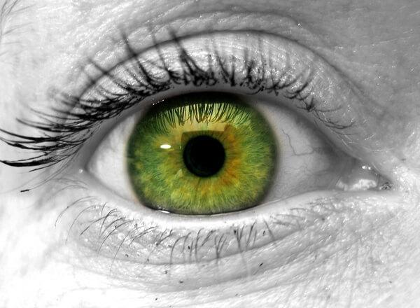 manon-s-eye-1241011